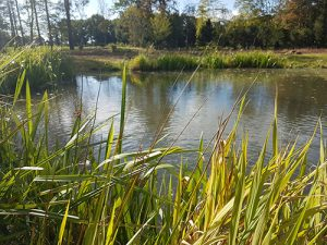 Large Country Estate - Extensive Pond Work