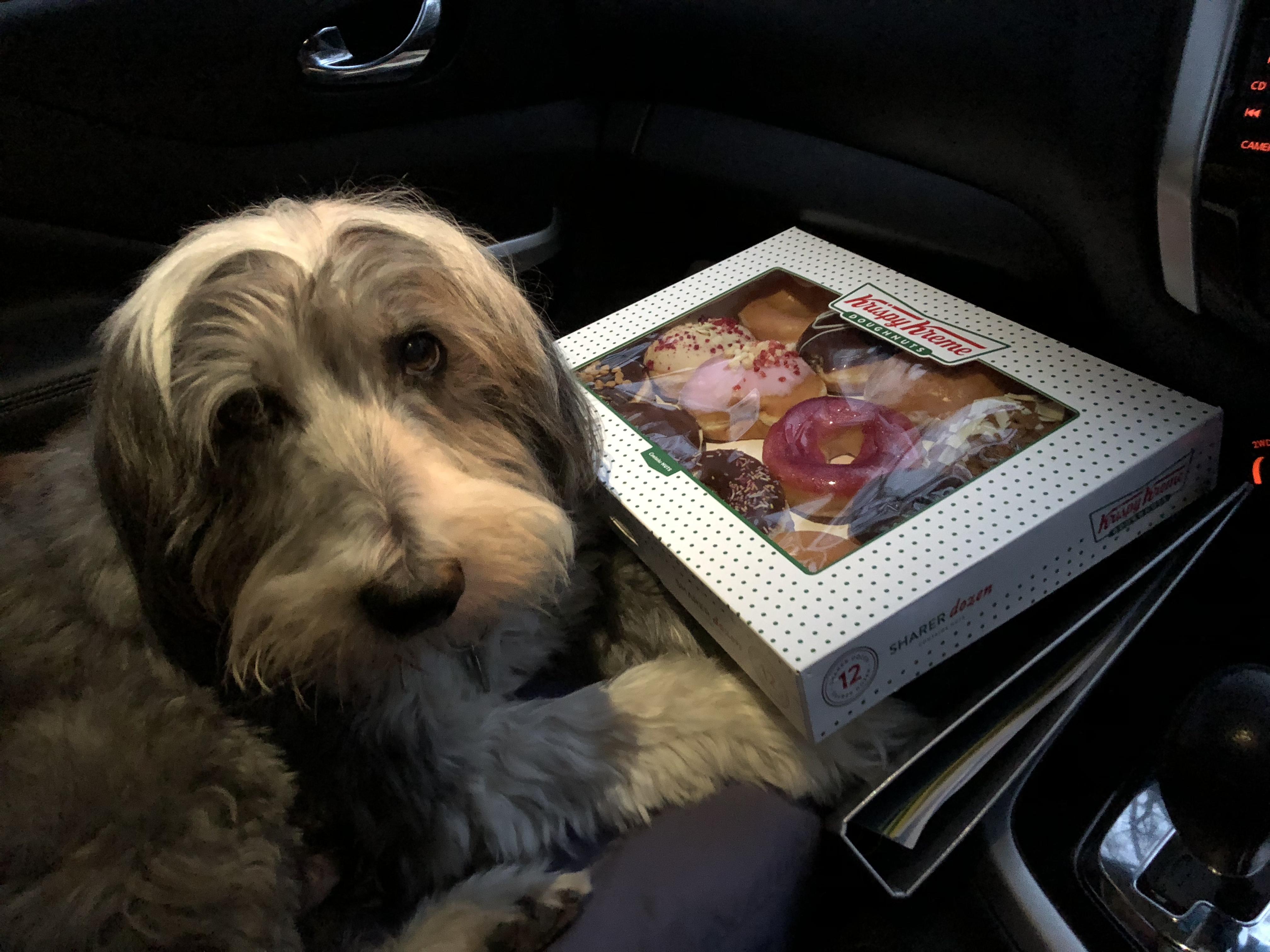 Dylan guarding the Krispy Kreme Donuts